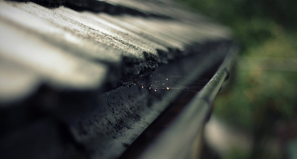 Loodgieter: een bladvanger aanschaffen voor in de regenpijp